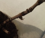 spiders 006 (2)