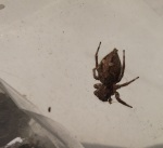 spiders 015 (2)