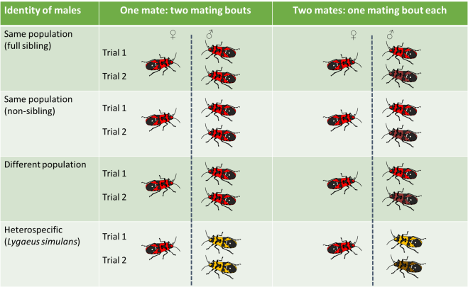 Diagram showing the design of experiment 1. Females (on the left) were paired twice with either one or two males from one of the four treatments. Red bugs indicate Lygaeus equestris while yellowbugs indicate Lygaeus simulans.